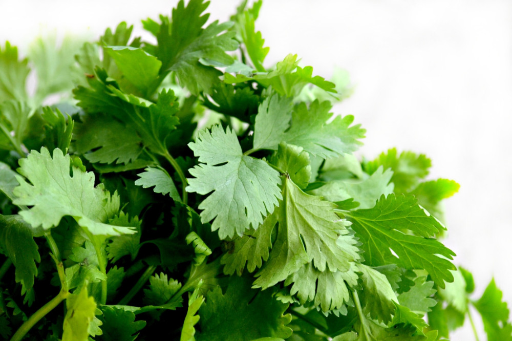 How To Store Coriander For Upto 2 Months